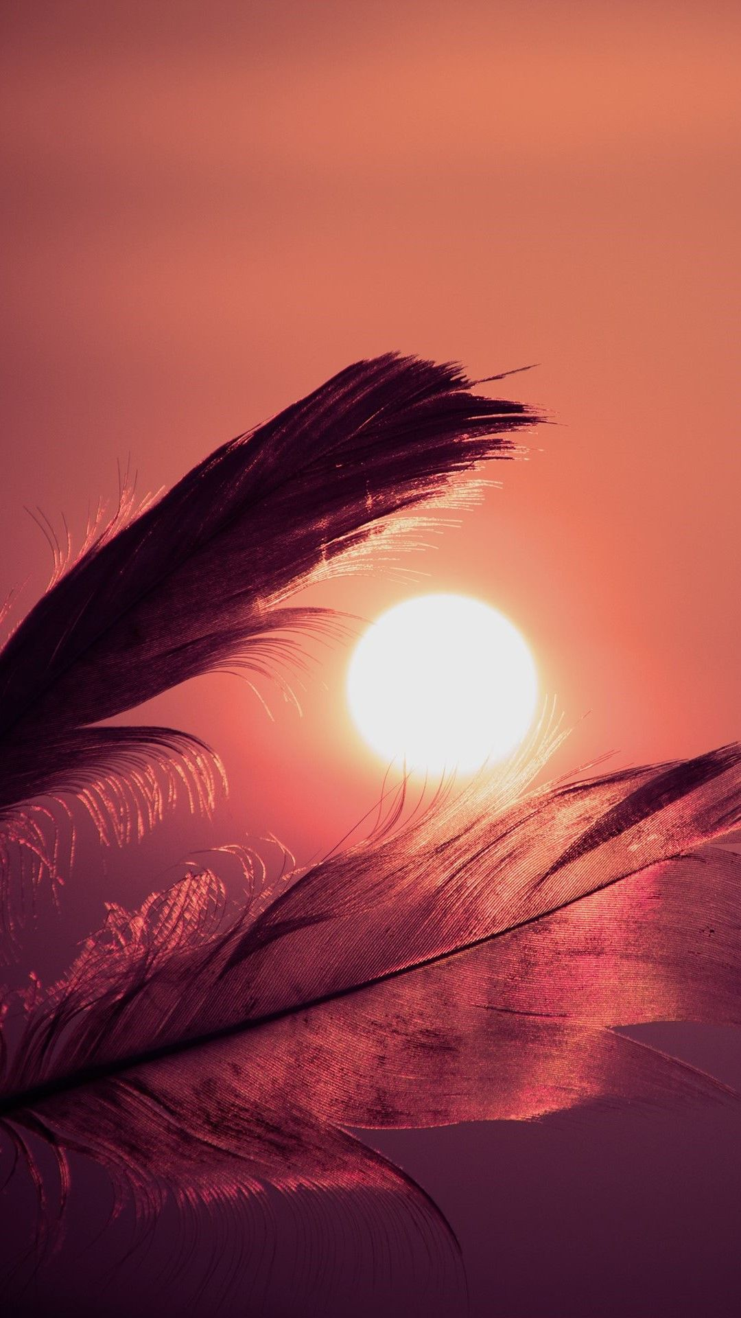 Golden & Sunset & Horsetail&Feather Nature Wallpapers Hd