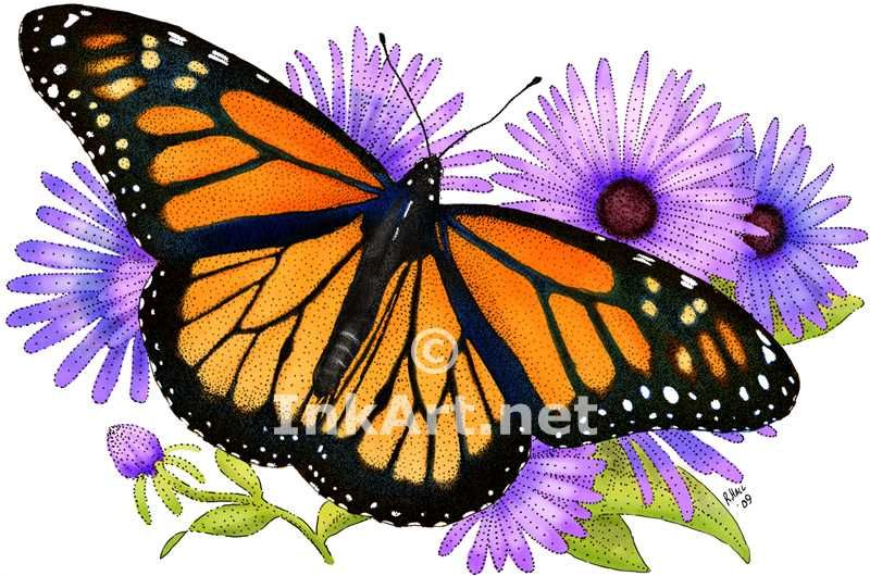 Magnificent How To Color A Butterfly Gallery   Example Resume .