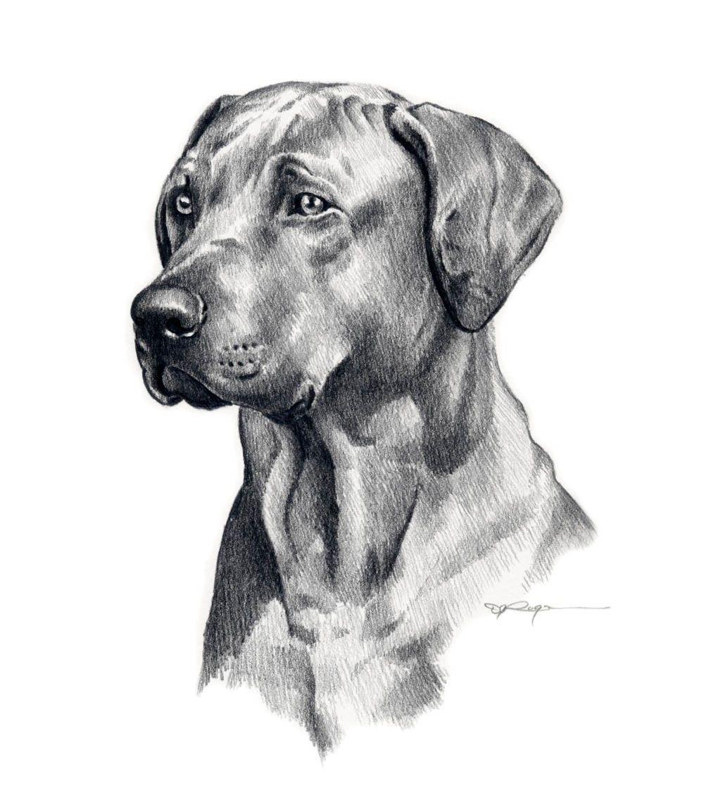 Pencil Sketch Dog