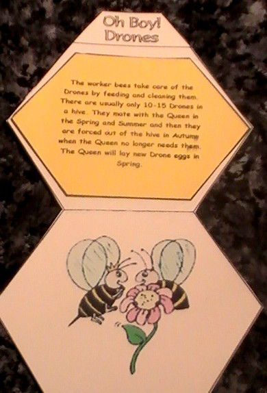 This was one of the largest and most detailed projects I have ever worked on with my kids and I also learned so much along the way, masha'Allah. The Honey Bee is the most fascinating creature and i…