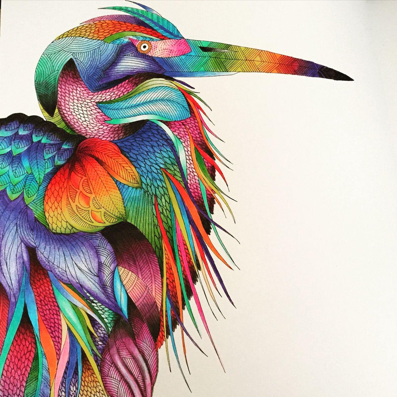 Completed From The Millie Marotta Animal Kingdom Colouring Book By Ins Animal Kingdom Colouring Book Millie Marotta Coloring Book Millie Marotta Animal Kingdom