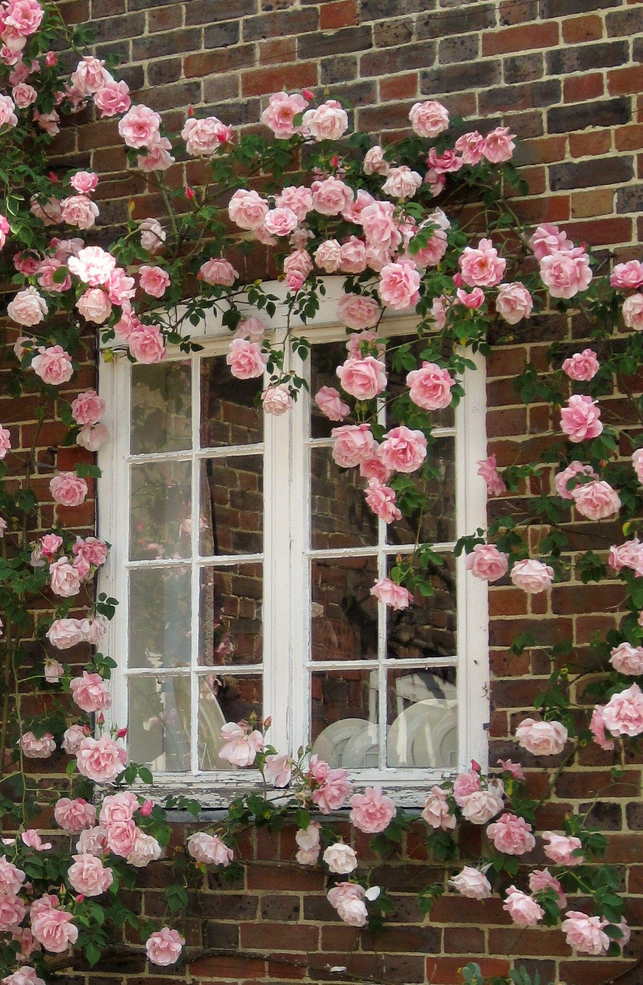 Window at Leeds Castle | In My Memories - Been There! | Pinterest ...
