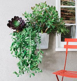 SELF WATERING WALL PLANTER #verticalgardening #plants