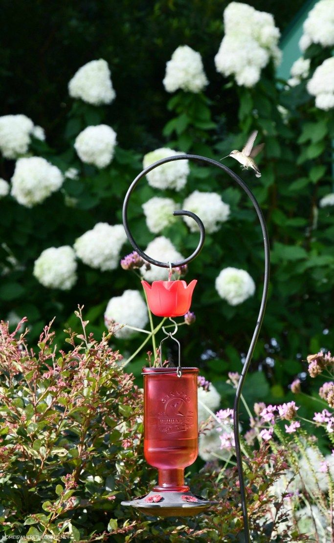 Attracting Hummingbirds and How to Revive a Tired Feeder
