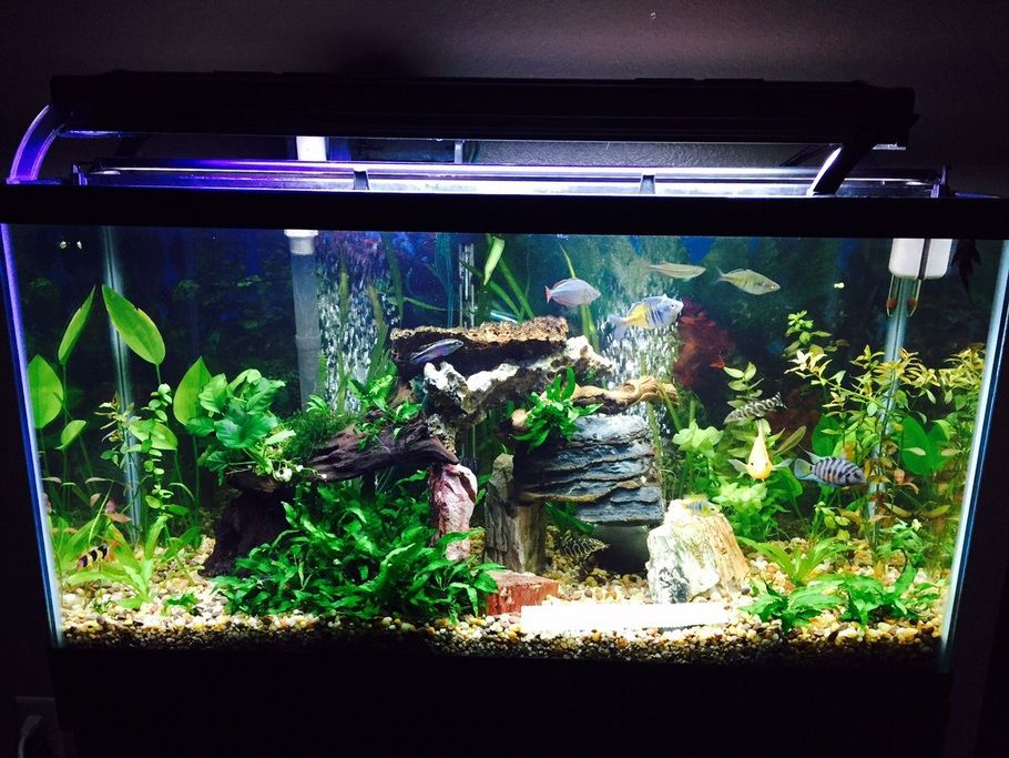 Chireef S Planted Tanks Photo Id 42569 Full Version Cool Fish Tanks Fish Tank Decorations Aquarium Fish Tank
