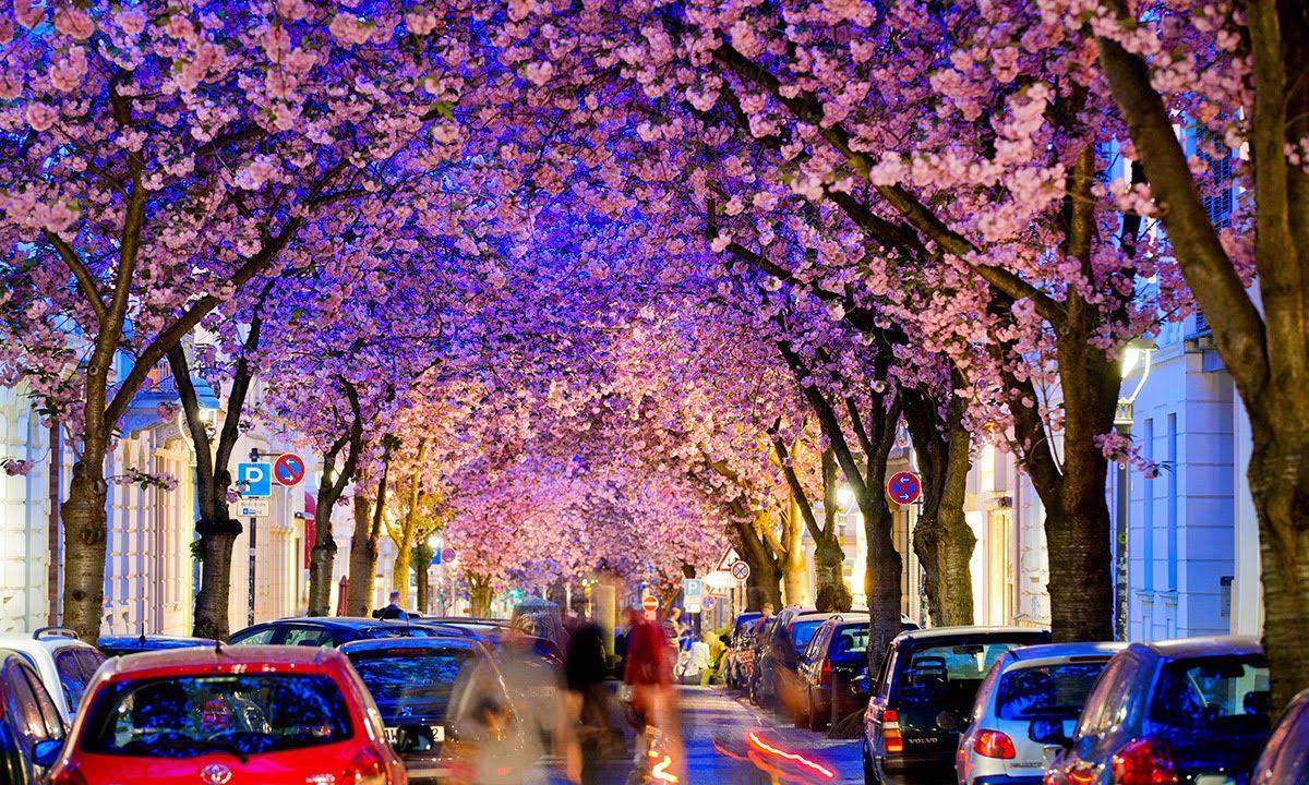 مدونة إبداع الجزائرية صور اجمل واغرب اشجار العالم Tree Tunnel Beautiful Tree Colorful Places