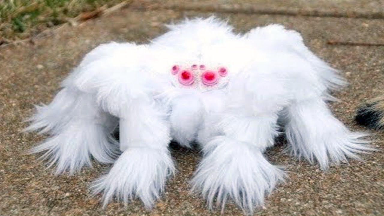 15 RAREST Spiders In The World! in 2020 Rare albino