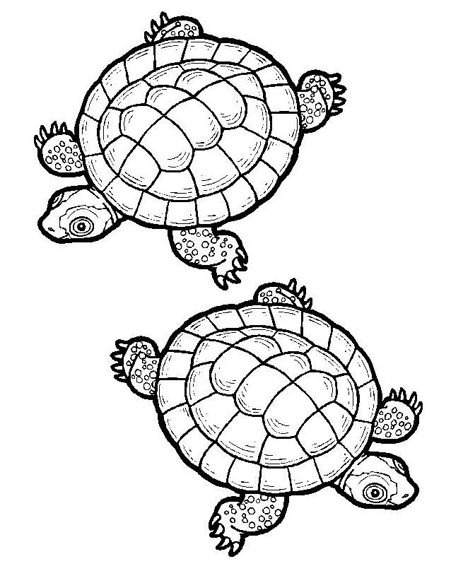 Coloriage tortue imprimer gratuitement coloring pages drawings adult coloring pages - Dessins tortue ...