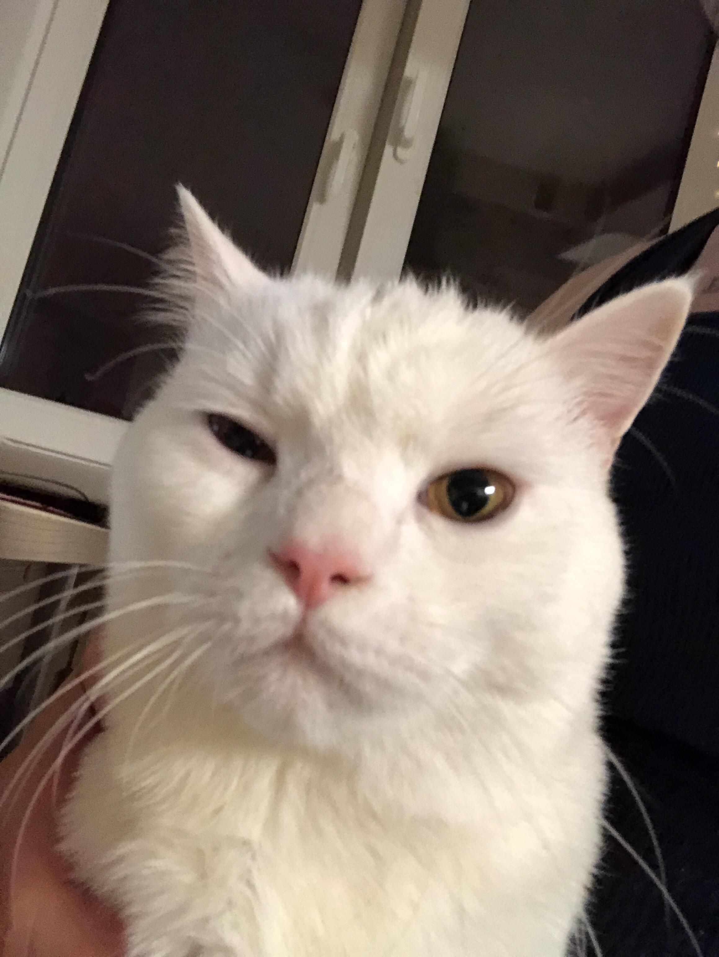 Someone Recorded Their Cat Saying Well Hi In A Southern Accent And I Ve Watched It 67 Times Cat Quotes Cats Orange Kittens