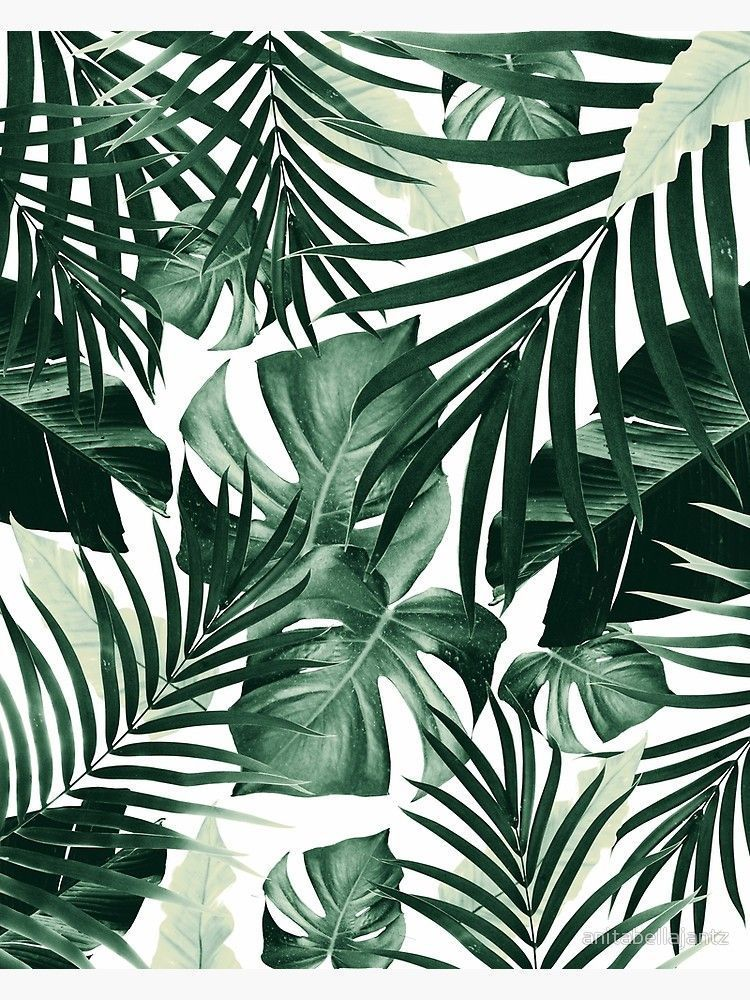 Tropical Jungle Leaves Pattern 4 Tropical Decor Art Fotodruck Von Anitabellajantz Leaves Wallpaper Iphone Plant Wallpaper Leaf Wallpaper Wallpaper iphone aesthetic leaves