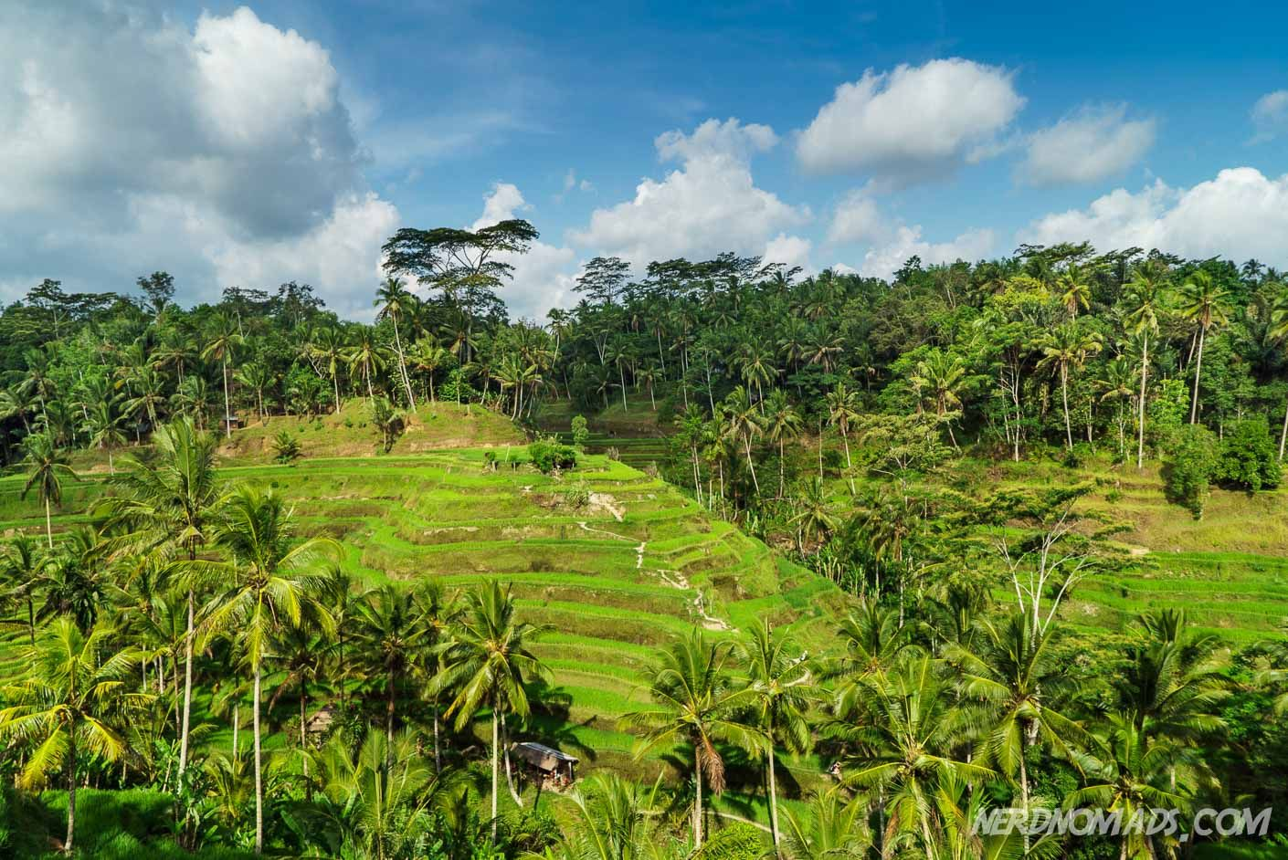 Eat, Pray, Love in Ubud, Bali