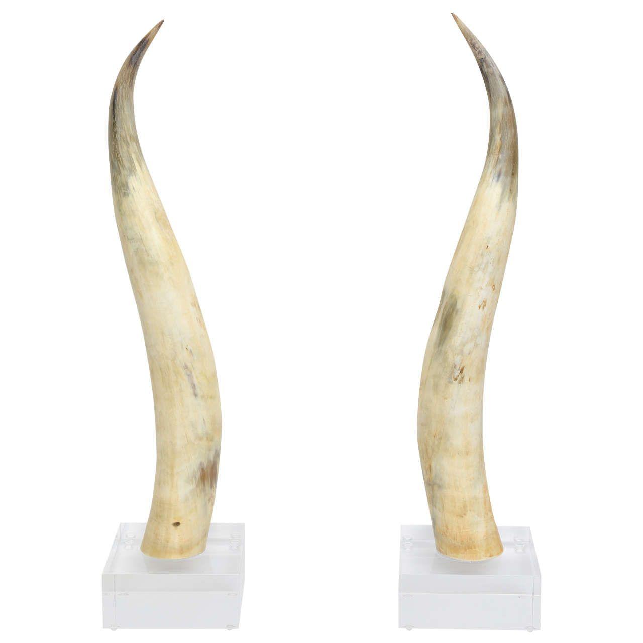 Horns on Lucite Base