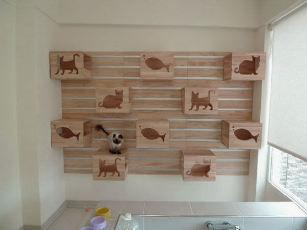 Cat Room Design Ideas cats get new place to play at shelter with ceiling cat highway too 1000 Images About For Cats On Pinterest Pets Cat Towers And