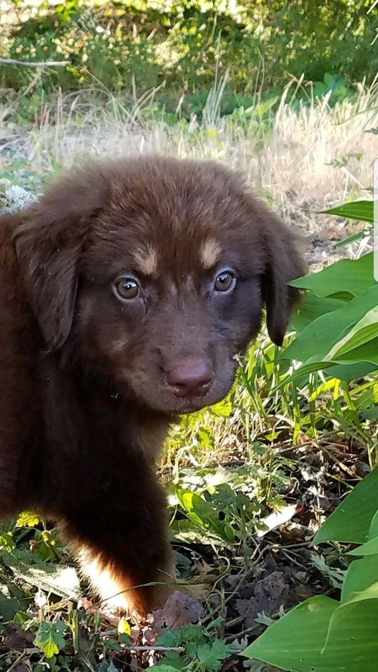 Adopt Yetti on Pets, Love pet, Shepherd mix dog