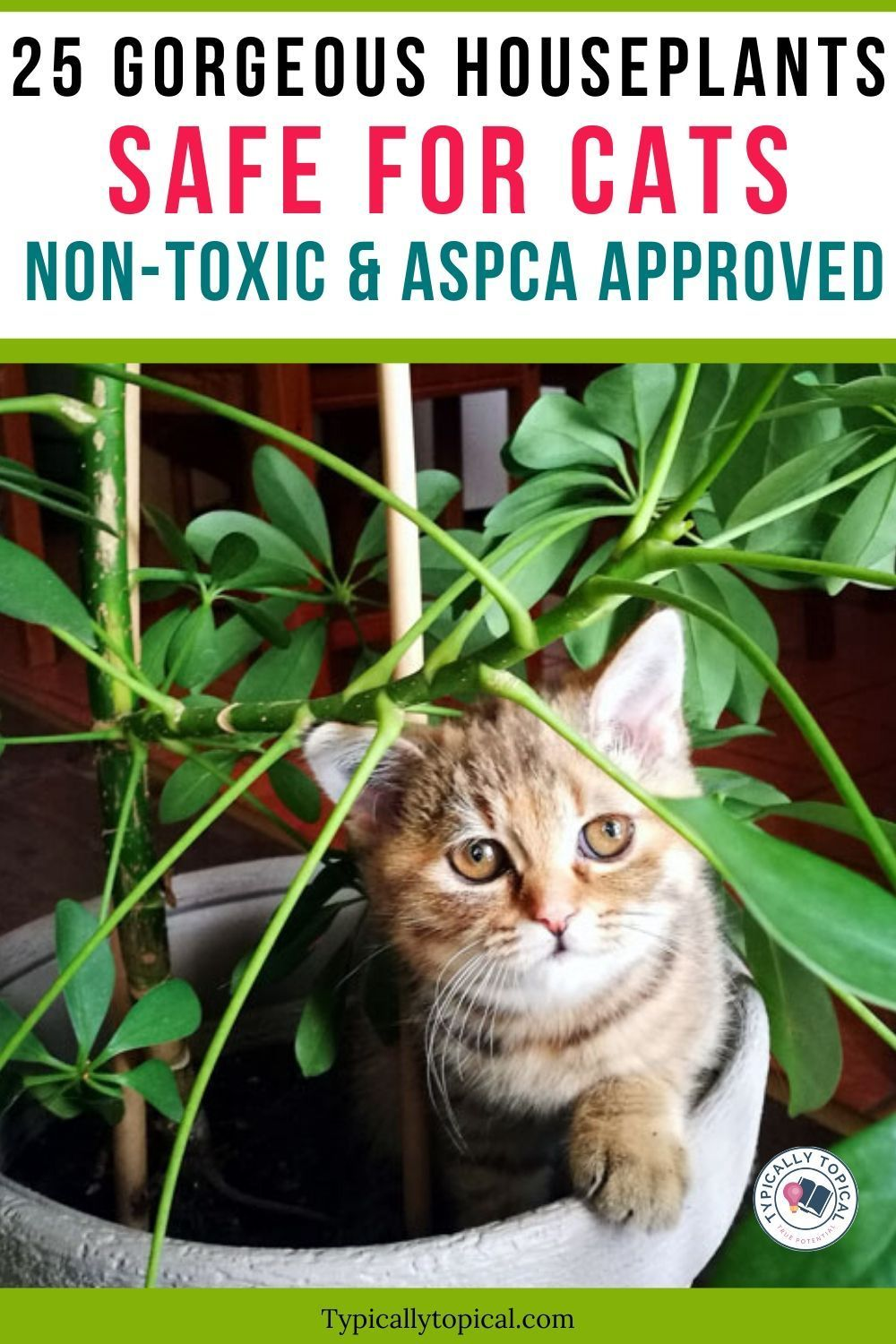 25 Gorgeous Houseplants That Are Safe For Cats And Dogs Aspca Approved Typically Topical In 2020 Houseplants Safe For Cats Pet Safe Cats