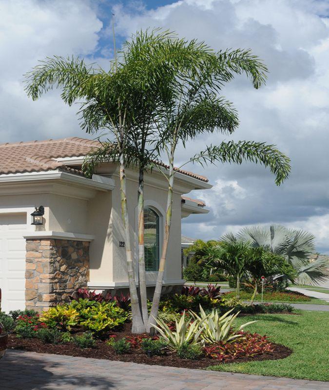 South Florida Tropical Landscape Ideas Planter Container: Tropical Landscape In Jupiter Country Club, Jupiter, FL