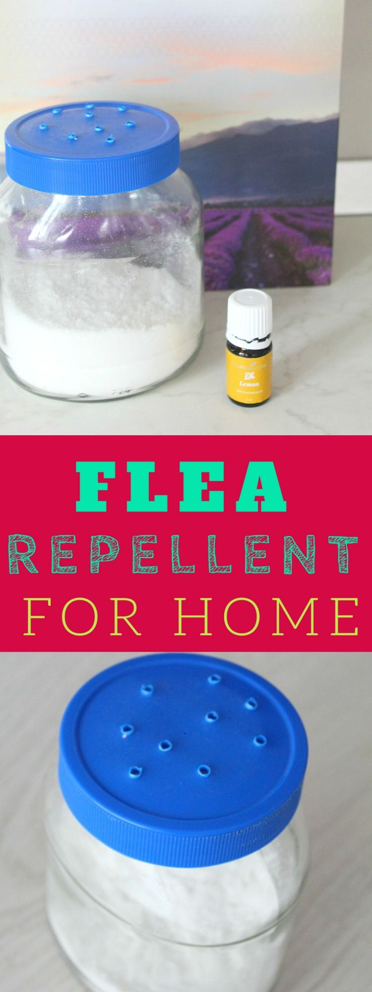 Homemade flea repellent for your home Flea repellent