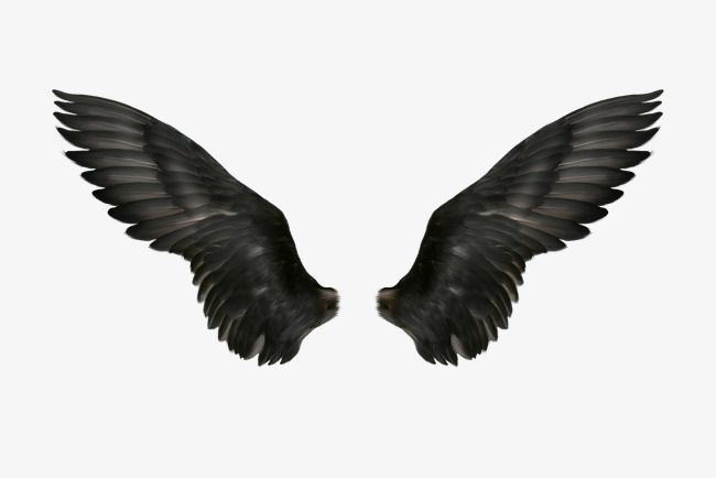 Black Wings Png And Psd Wings Drawing Black Wings Wings