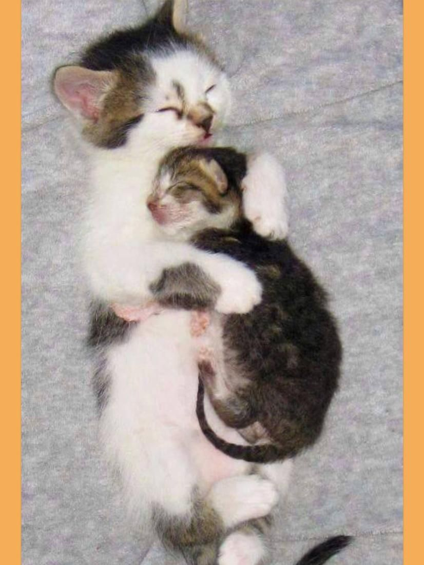 Snuggle Time Cuteanimals Cats Milye Kotiki