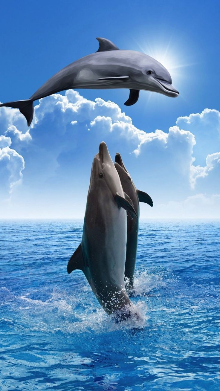 Dolphins So Beautiful Animal Wallpaper Iphone Tier Tierhi Dolphins So Beautiful Hintergrund An Dolphin Photos Dolphin Images Animals