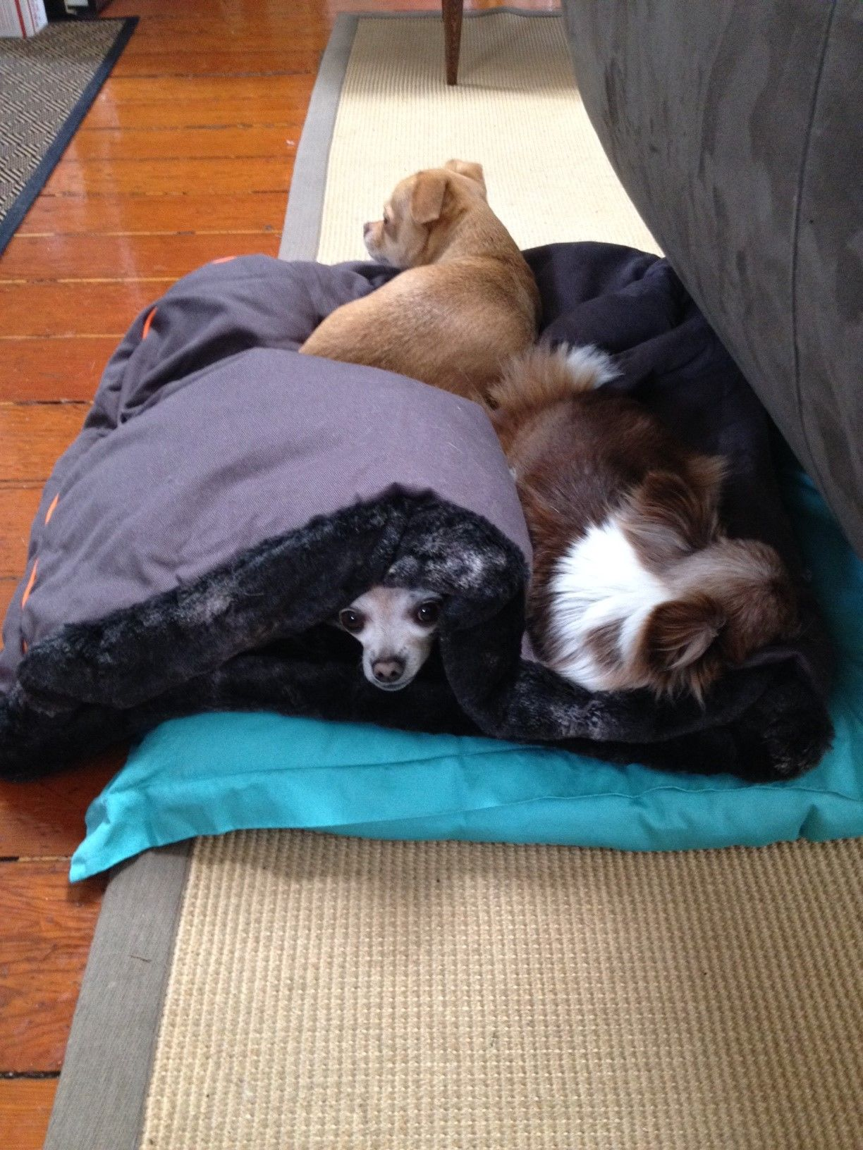 Pin By Pet Lifestyle And You On Fun Pet Products Cool Pets Pet Beds Luxury Pet Beds