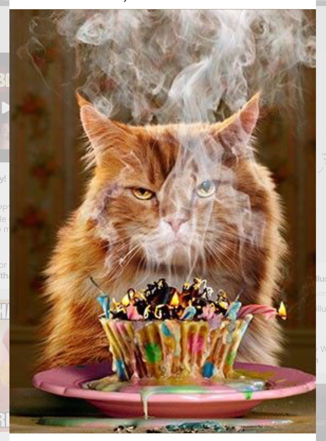 Pin by patricia atterberry on flash pinterest explore happy birthday cats birthday fun and more kristyandbryce Gallery