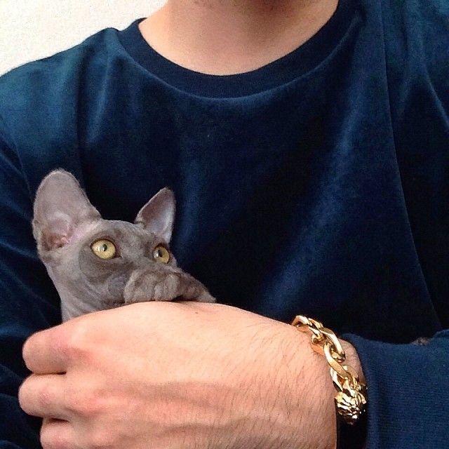 Wyatt (Mitch's cat)