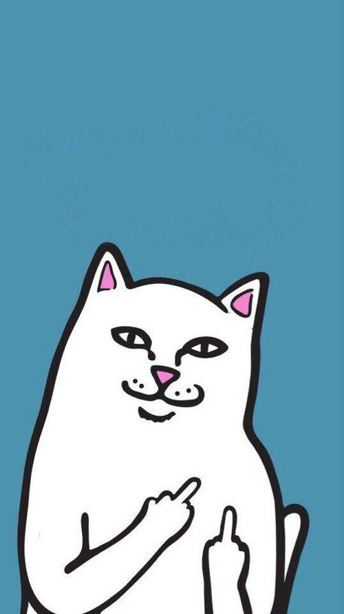 Cat Wallpaper And Lockscreen Image