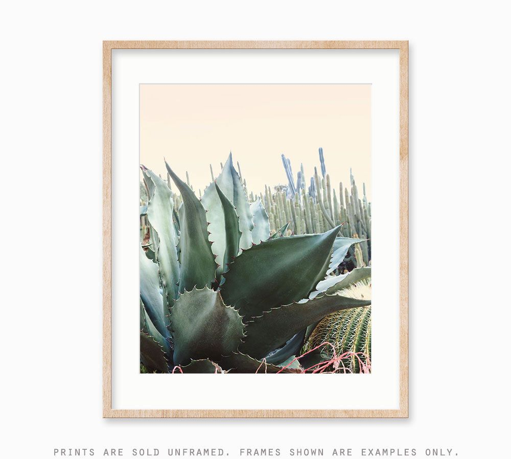 Pin by farrah dodson on decore pinterest cactus cactus print