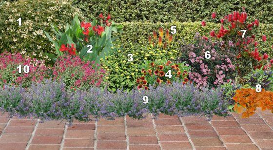 fleurir une terrasse 1 oranger du mexique 2 cannas 3 phlomis 4 gaillarde 6 rosier the. Black Bedroom Furniture Sets. Home Design Ideas