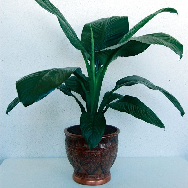 Indoor Banana Plant Wants Bright Indirect Light Frequent Watering Loves Humidity Monthly