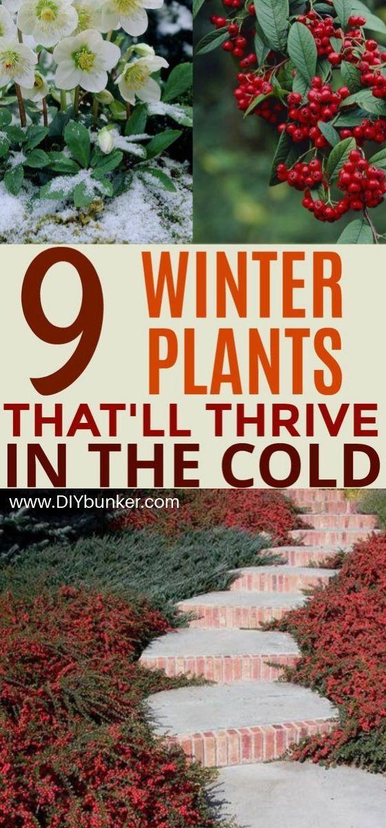 9 Ideen für den Wintergarten #wintergardening