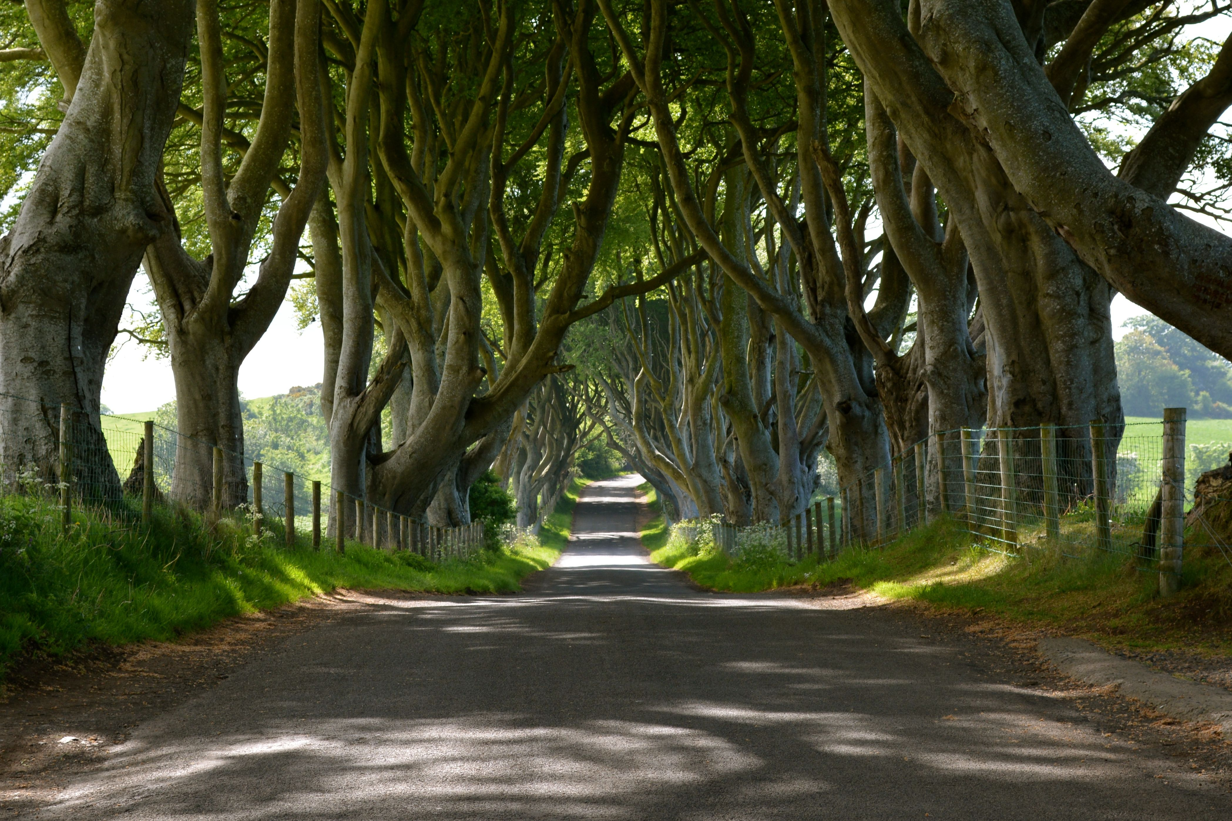 Dark Hedges in Ballymoney, N Ireland, United Kingdom