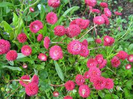Kuvahaun tulos haulle maailman ruusulajit