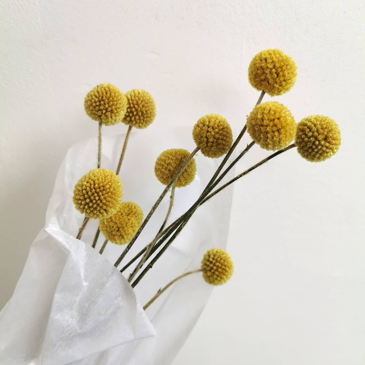 Craspedia Aka Billy Buttons These Everlasting Dried Flowers Look Amazing On Their Own Or Combined With A Dried Grass In A Vase We Have Had A Super Busy Wee In 2020