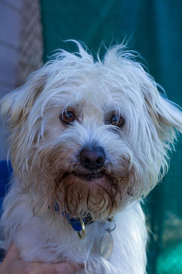 Adopt Quigley On Petfinder Dog Adoption Dog Love Dog Safe