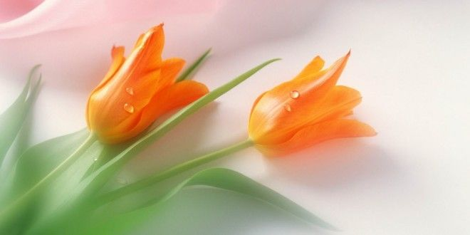 Love Flowers Wallpapers Desktop