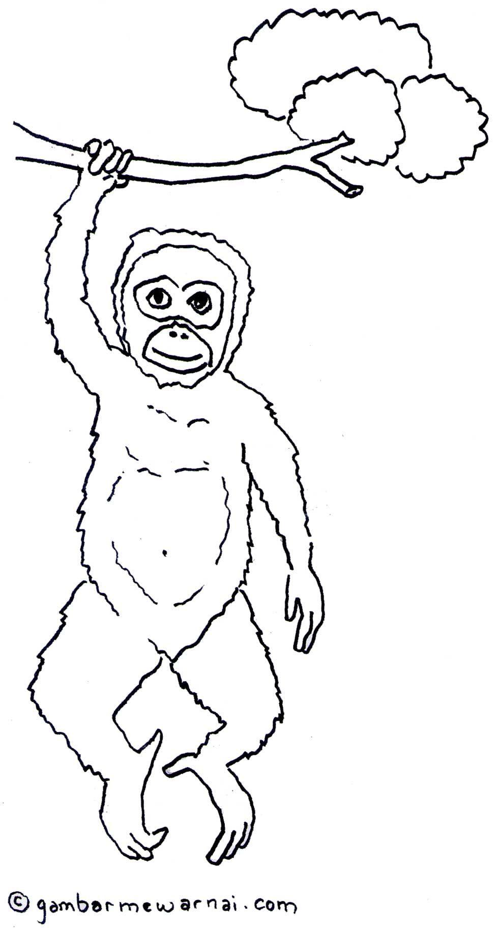 Gambar Mewarnai Hewan Orang Utan Coloring Pages Pinterest