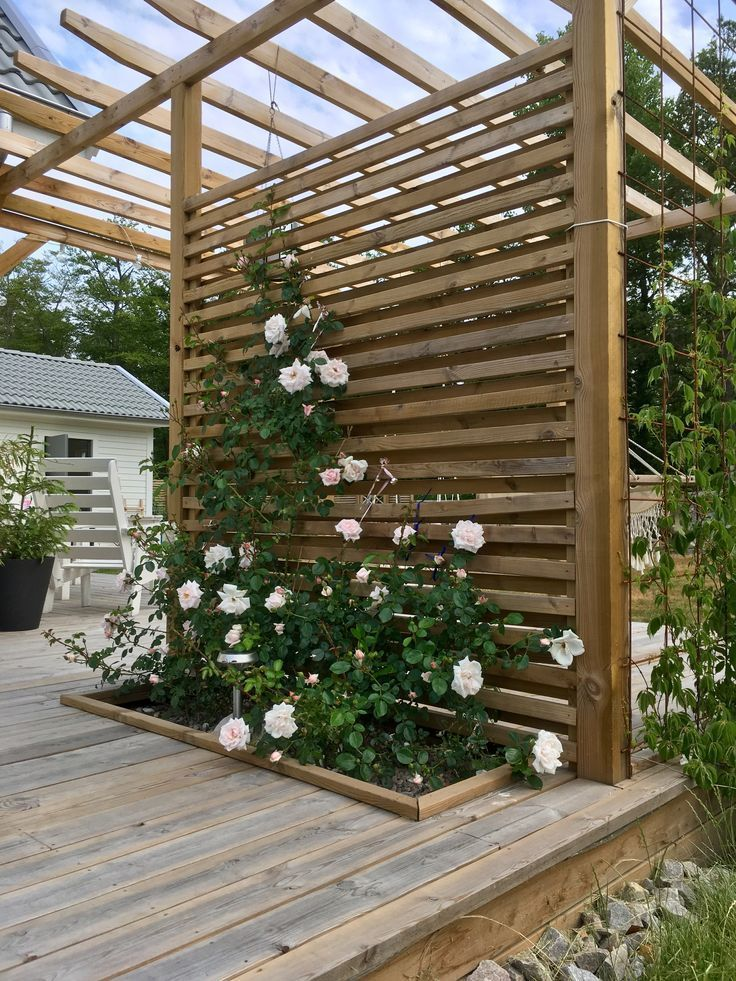 Discount Holzdeck mit Kletterrose New Dawn in der Pergola - Holzideen #patiodesign