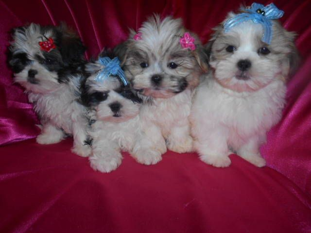 Pin By Madi Carbajal On Lovable Furry Friends Puppies Cute Animals Cute Dogs