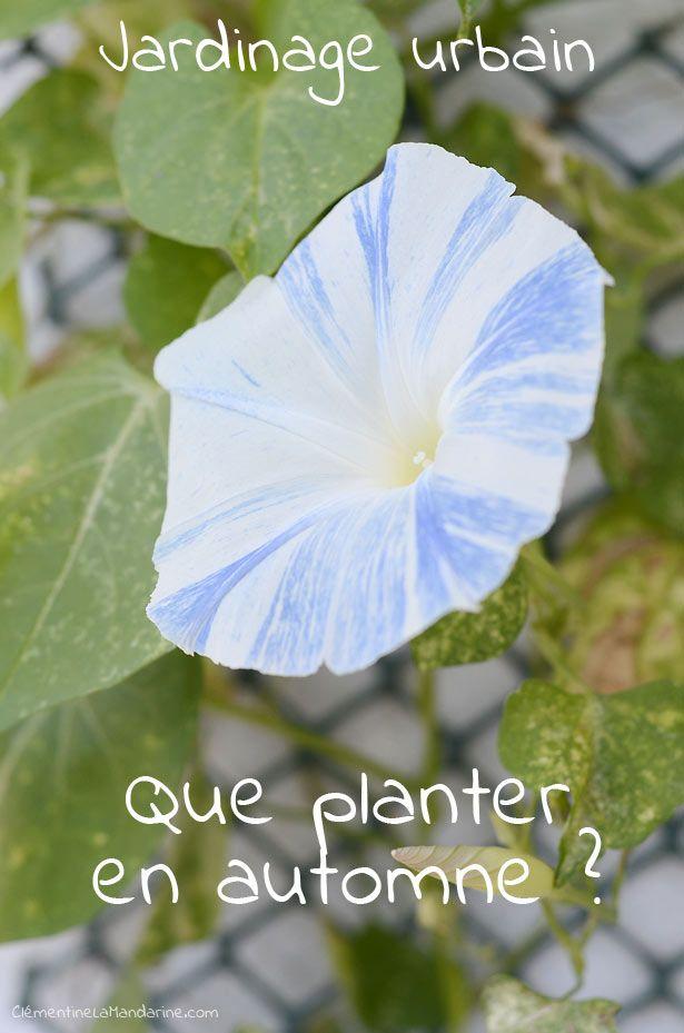 Que planter en automne jardinage pinterest automne - Quoi planter en septembre ...