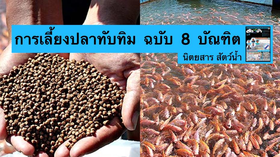 ปลาท บท ม ไม พอตลาด เป ดส ตร เล ยงปลาท บท ม ฉบ บ 8 บ ณฑ ต