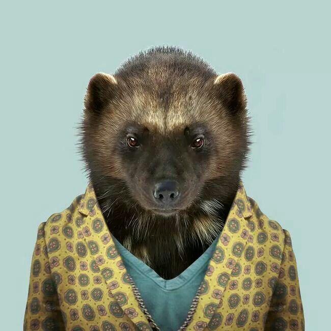 Wolverine / Zoo portraits-Yago PARTAL