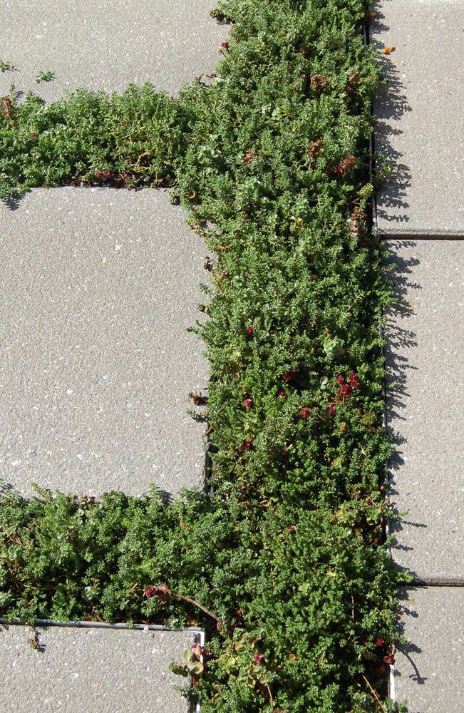 Roof Pavers And Sedum At 75 State Street In Boston, MA.
