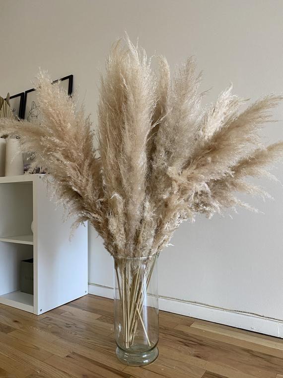 1 stem Fluffy PAMPAS GRASS Dried Natural 45