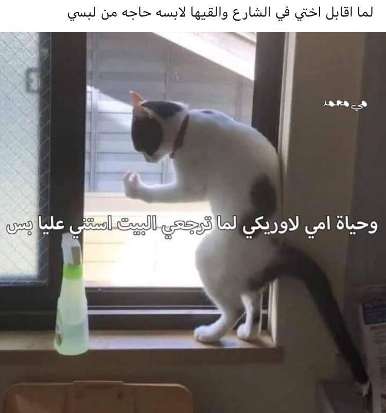 Pin By ゚ 𝙇𝙎𝙆 On مضحك او صحيح Fun Quotes Funny Dora Funny Funny Arabic Quotes