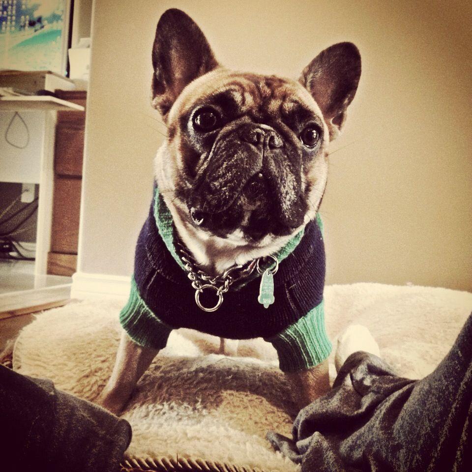 i know i rock! ;) Bulldog, French bulldog, Frenchie