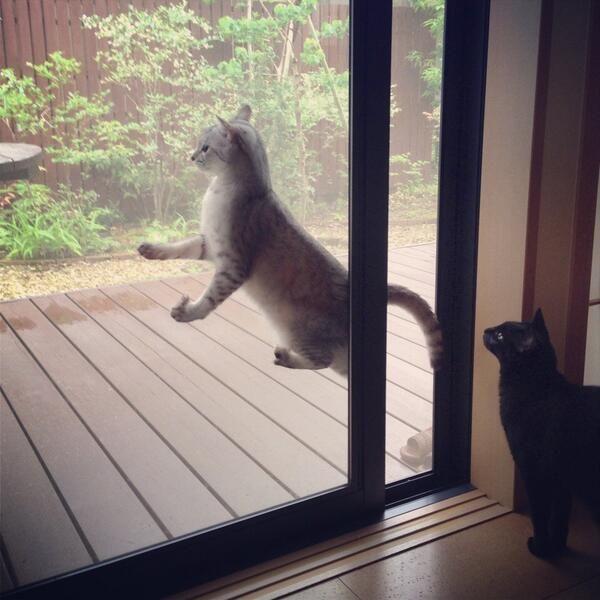 就愛被夾住!喵星人才辦得到的門窗夾夾樂!   寵毛網Petsmao   寵物資訊平台