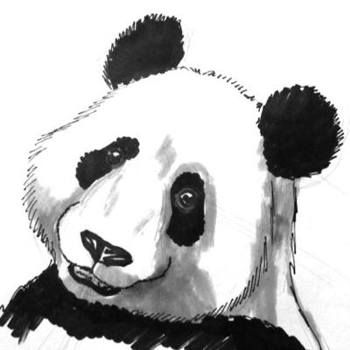 Panda Face Colored Drawing Projects To Try In 2019 Pinterest