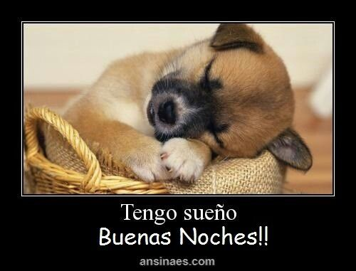 Pin By Nayeli Hernandez On Mis Frases Pinterest - 29 adorable animals that will put a smile on your face